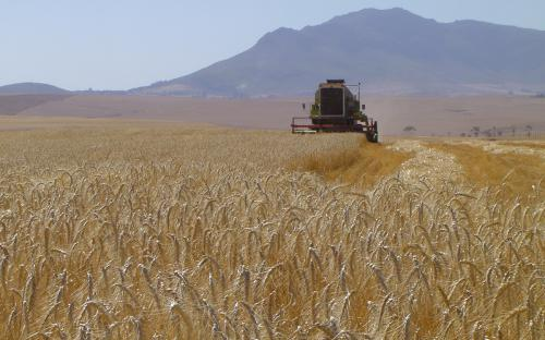 Serviteurskraal Wheat